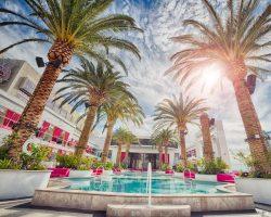 Palmträd vid pool